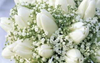 Festeggiamo 15 anni di successi con il fiore degli Sposi: La Gypsophila