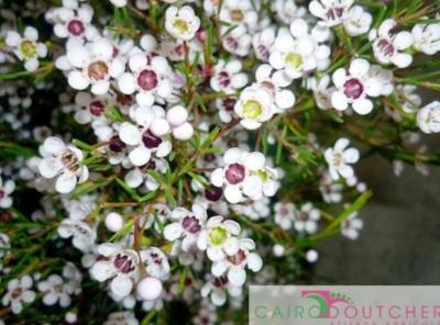 Eccellenza 2015: Wax Flower Snowflakes