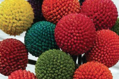 Linee guida per tingere la Craspedia Paintball - Cairo & Doutcher